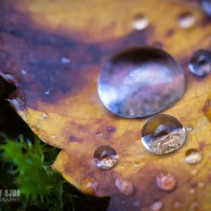 Dew upon Fall leaves